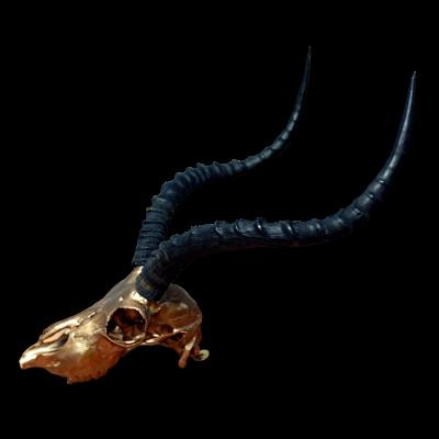 Real Impala Skull Bronze Spray Painted metal bracket African Antelope Horns