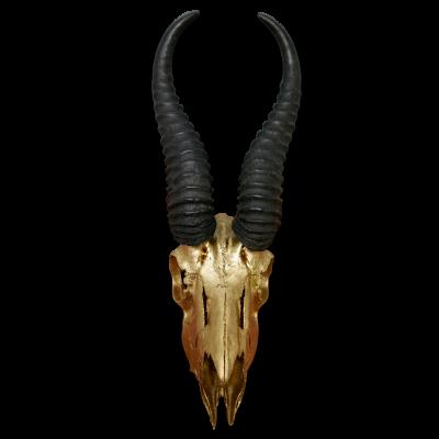 Real Springbok Skull Gold Spray Painted metal bracket African Antelope Horns