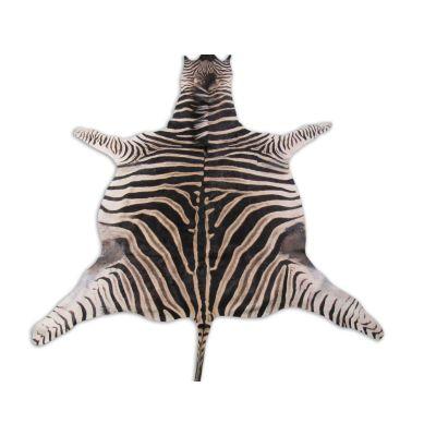 Real Zebra Skin Rug Size: 8' X 6 2/3' Burchell's Hide Zebra Rug 90