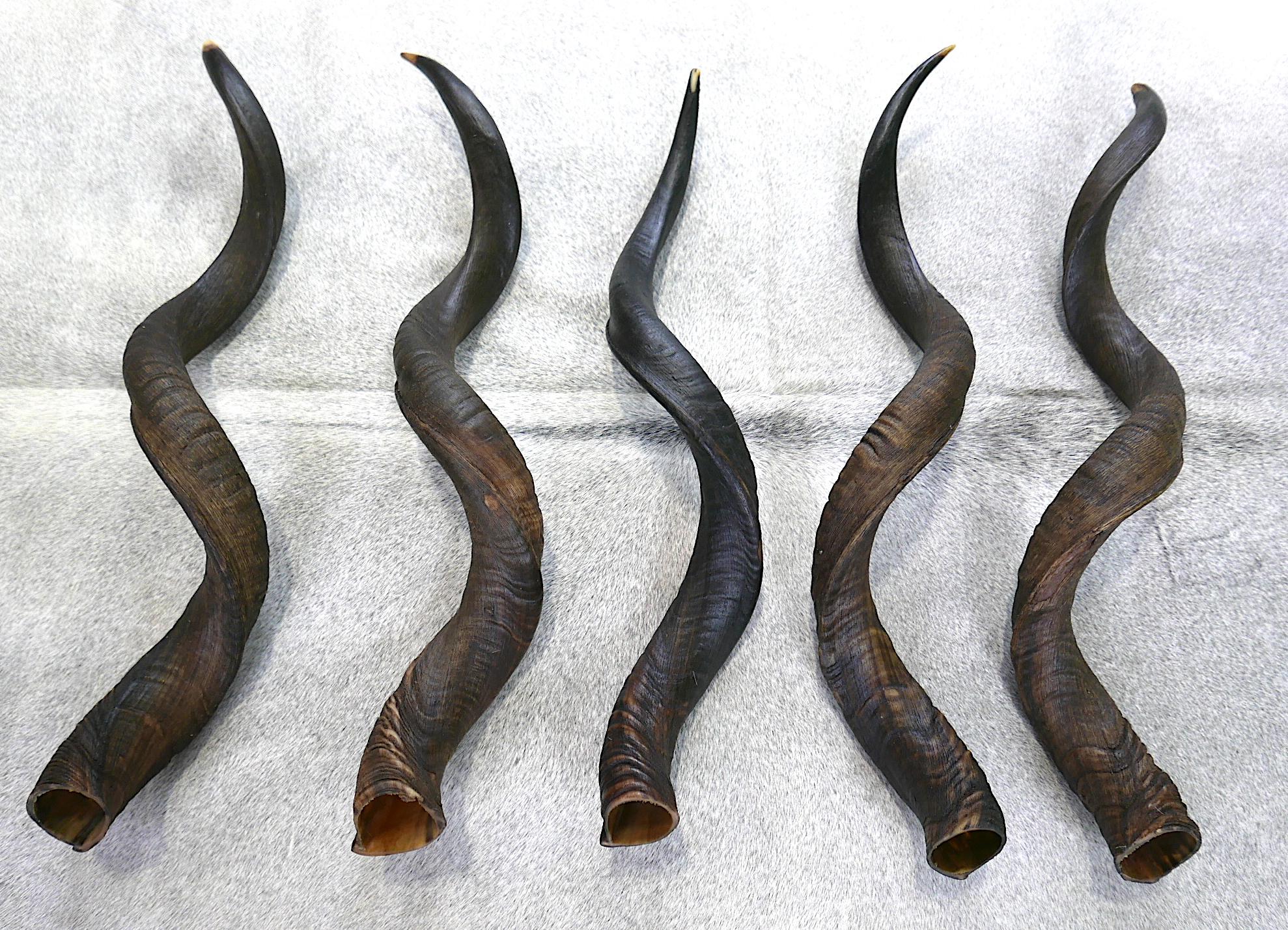 Huge Stock Of Kudu Horns!