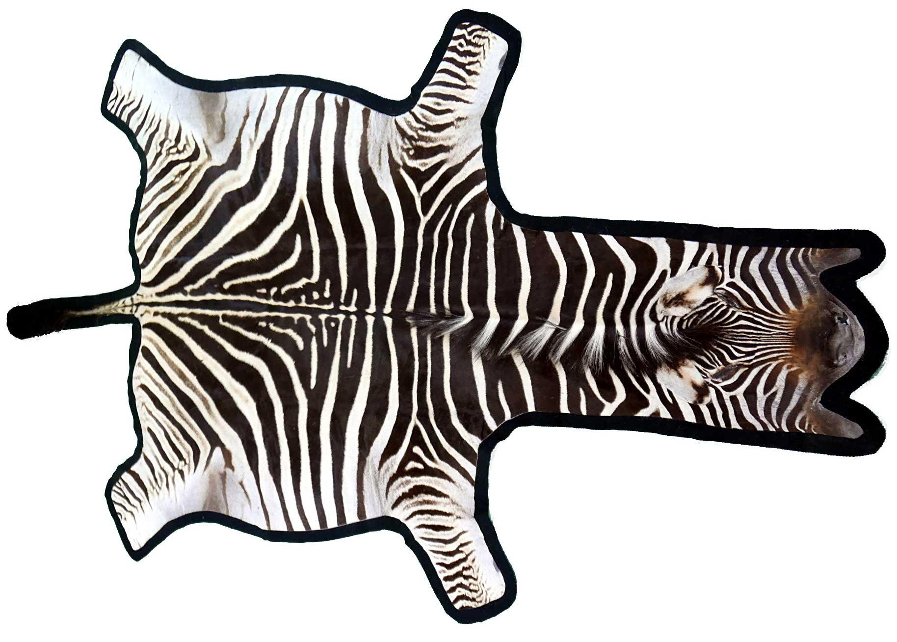 Burchell's Zebra Skin Rug